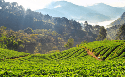 COLOMBIA INVESTMENT SUMMIT 2019 - Agroindustry